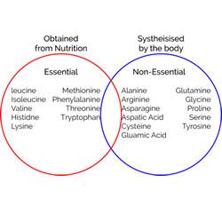 Niet Essentiële Aminozuren