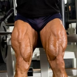 Quadriceps Trainen