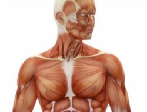Spiervezels Types Uitgelegd